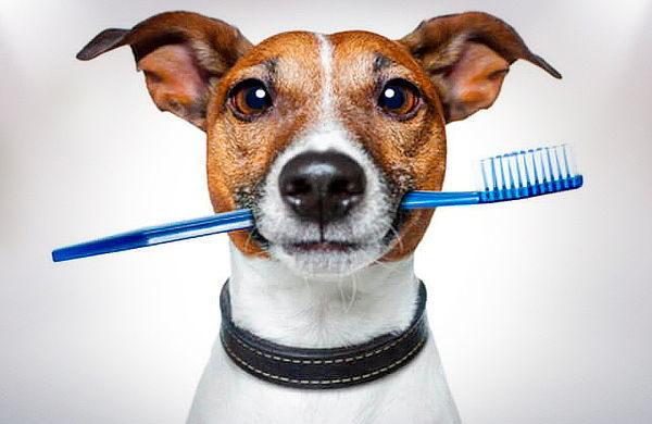 Limpieza bucal Perros y Gatos