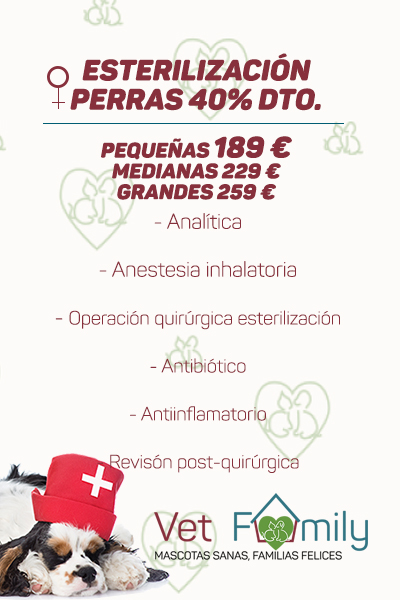 clinica-veterinaria-massanassa-vetfamily-CAMPAÑA DE esterilización-PERRAS
