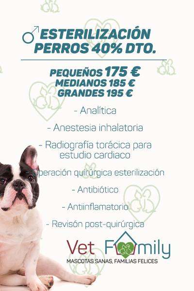 clinica-veterinaria-massanassa-vetfamily-CAMPAÑA DE esterilización-PERROS