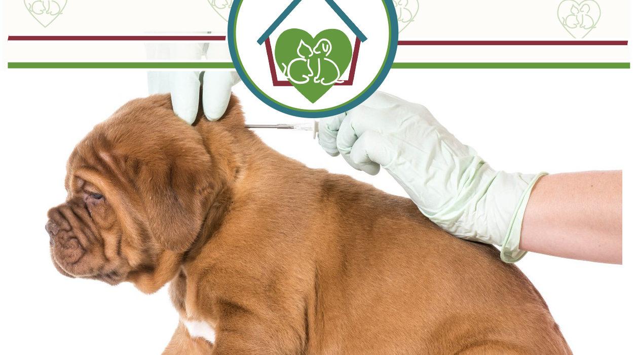 clinica-veterinaria-vetfamily-chip-microchip-identificacion-perros-gatos.jpg