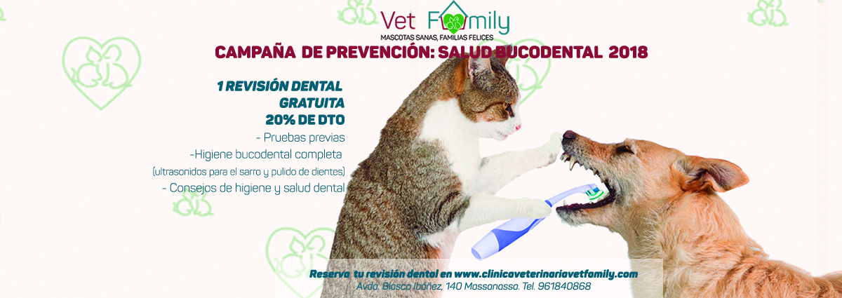 clinica-veterinaria-vetfamily-massanassa-campaña-limpieza-dental-3-clinica-veterinaria-vetfamily