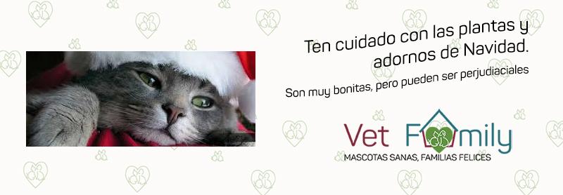 clinica-veterinaria-vetfamily-massanassa-navidad-mascotas-gatos