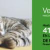 esterilización de gatas