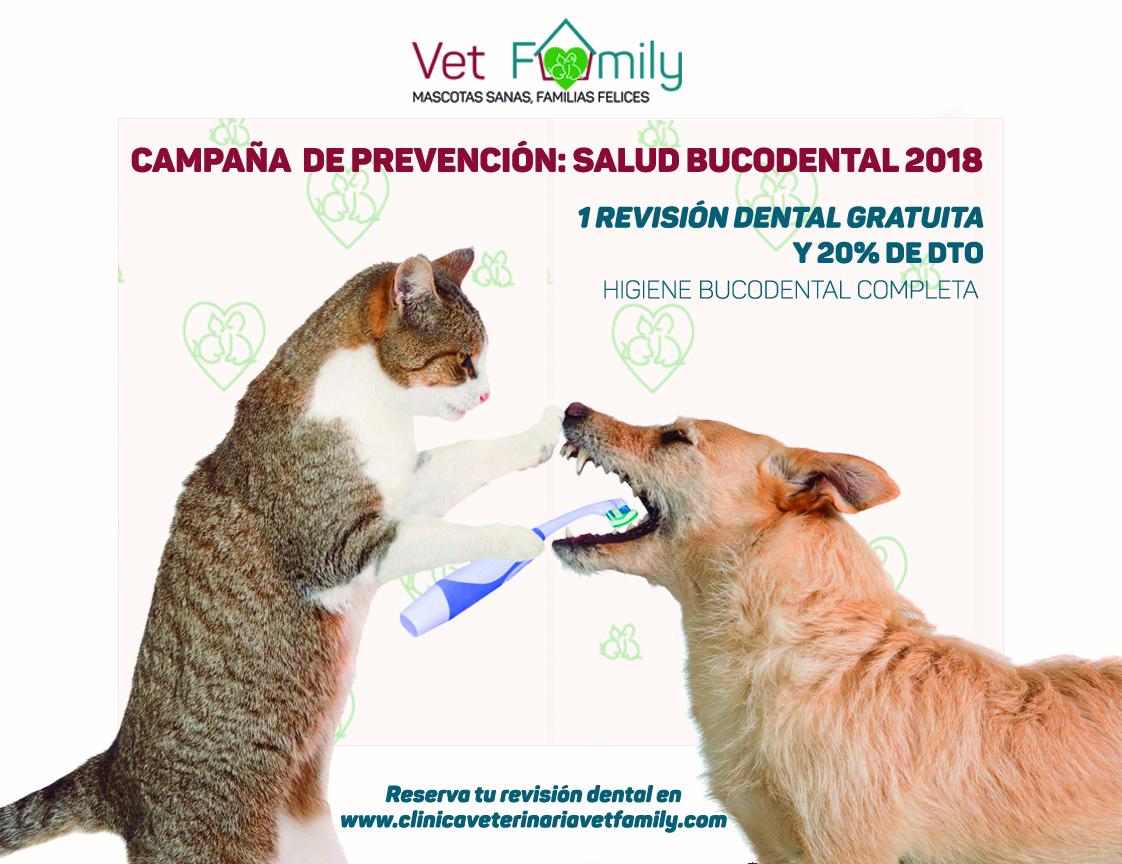 veterinario-campaña-limpieza-dental-perros-gatos