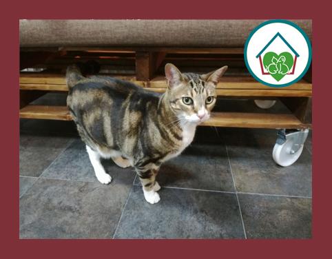 gato-clinica-veterinaria-vetfamily-massanassa